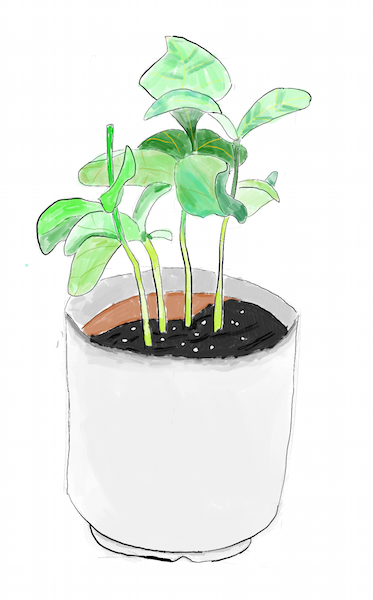 A drawing of a plant in a cup